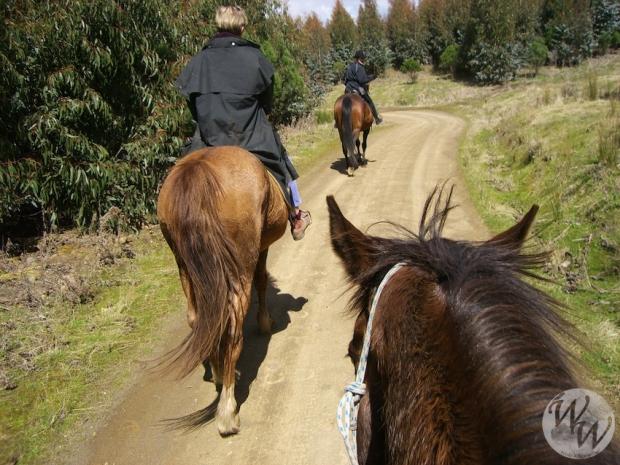 Horsehaven Tasmanien