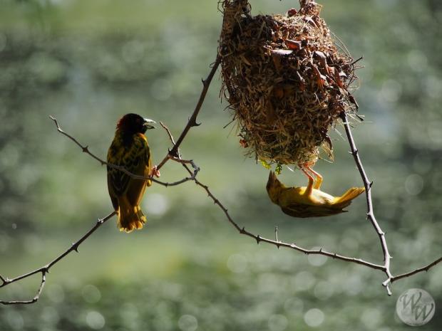 Viele Vögel finden sich im Bandia Nationalpark