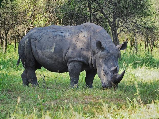 Mit etwas Glück bekamen wir auch ein Nashorn zu sehen