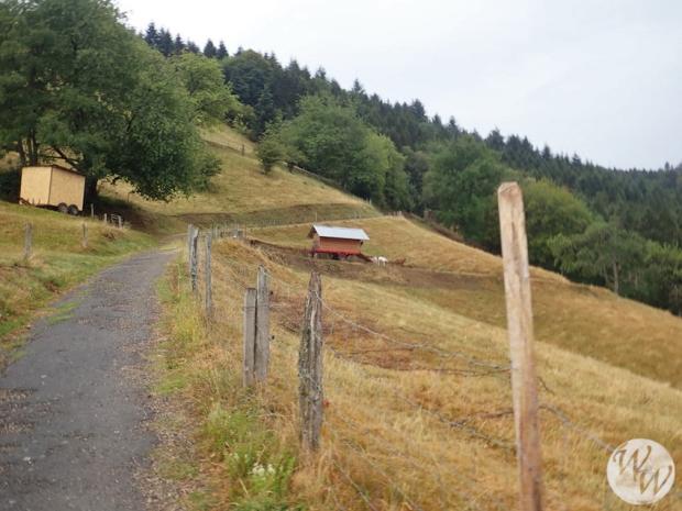 Münstertal bis Haldenhof